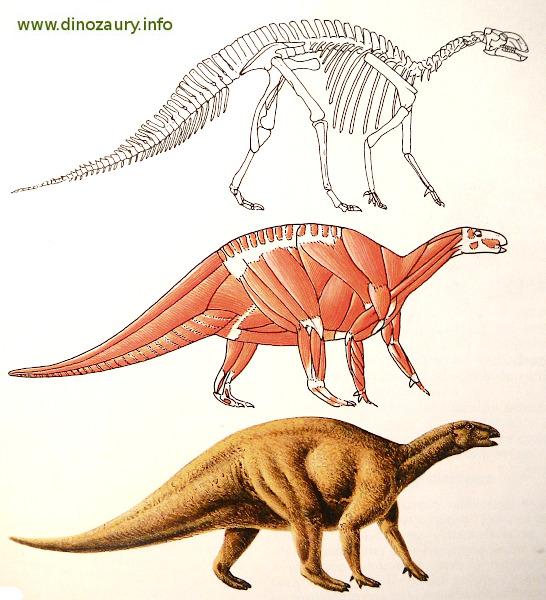 rekonstrukcja wyglądu dinozaurów - szkielet, mięśnie, skóra