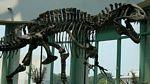 szkielet akrokantozaura
