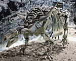 szkielet Animantarks