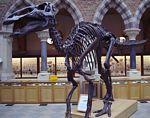edmontozaur szkielet