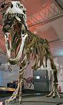 gigantozaur szkielet