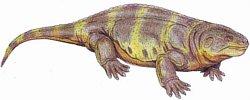 kotylozaur 1