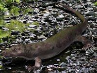 kotylozaur 2
