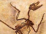 mikroraptor 2