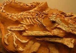 skamienialosci dinozaury