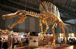 spinozaur szkielet