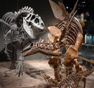 szkielety dinozaurów