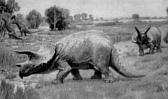 dwa triceratopsy