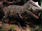 tyranozaur w zoo